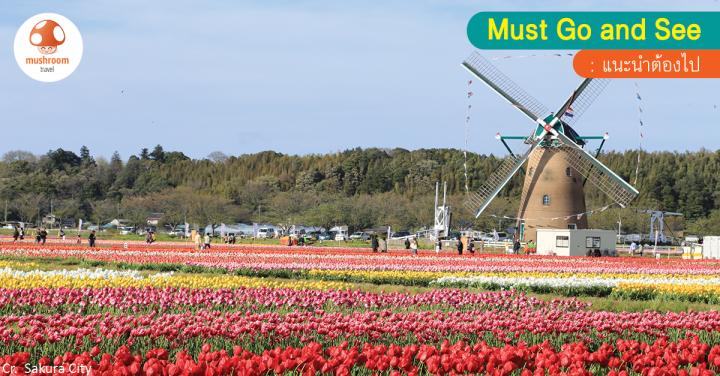 ห้ามพลาด! เทศกาลชม ดอกทิวลิป ญี่ปุ่น ในจังหวัดชิบะ หนึ่งปีมีเพียงครั้ง!