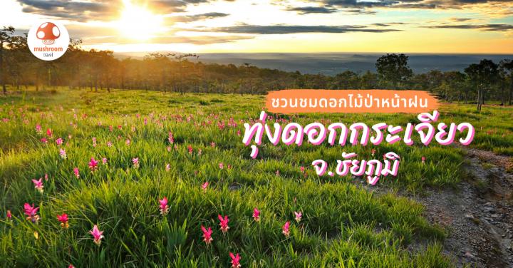 ชวนเที่ยวไทยหน้าฝน ชม ทุ่งดอกกระเจียว จ.ชัยภูมิ 2563