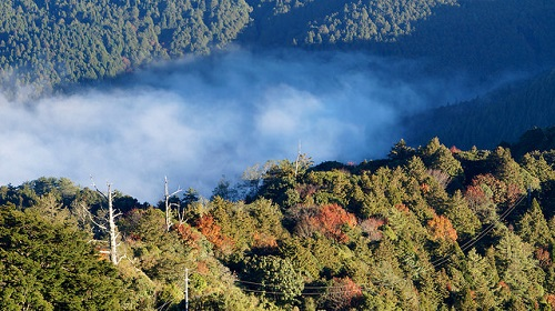 Alishan Forest Recreation Area (2)