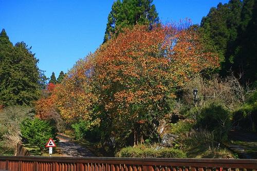 Alishan Forest Recreation Area (3)