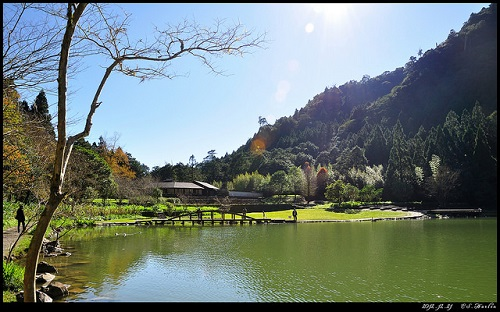 Mingchih Forest (1)