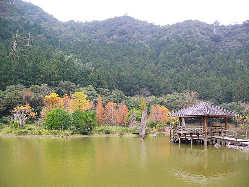 Mingchih Forest (3)