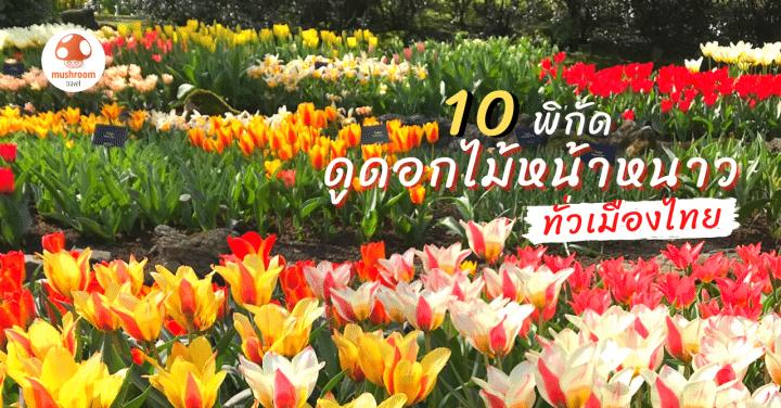 10 พิกัด ดูดอกไม้ หน้าหนาวทั่วไทย ไปได้ทั้งครอบครัว