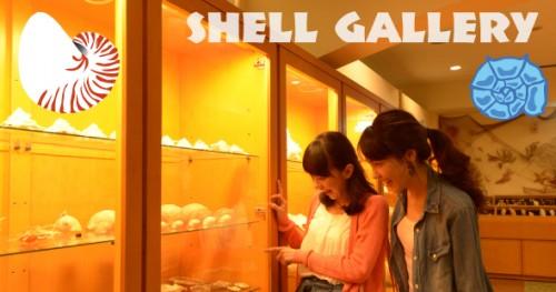 shellmain1