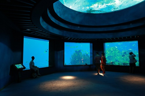 sea-aquarium-3