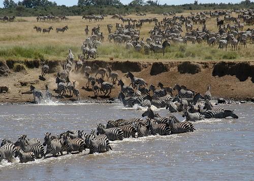 แพ็คเกจทัวร์แทนซาเนีย เคนย่า อุทยานเซเรนเกติ 8วัน5คืน