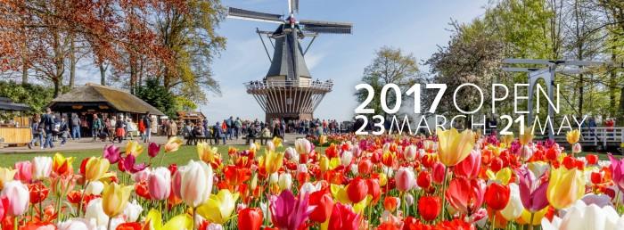 เทศกาลดอกทิวลิป เนเธอร์แลนด์ 2017