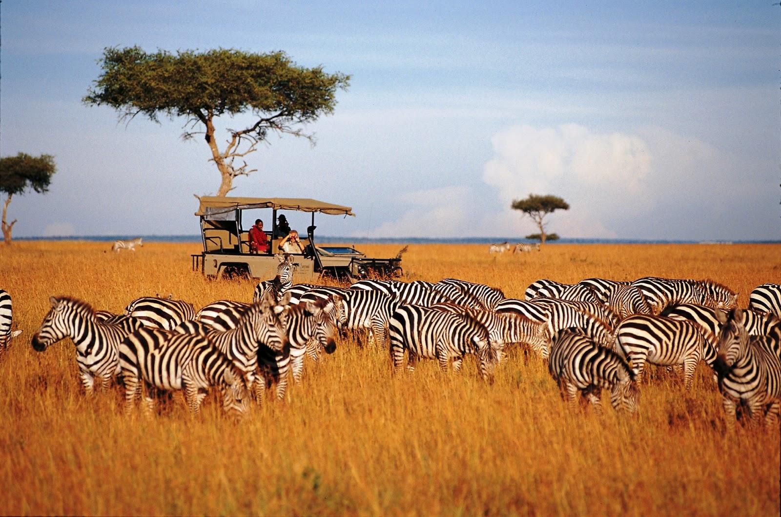 แพ็คเกจทัวร์แทนซาเนีย เคนย่า อุทยานโกรองโกโร่ 8วัน5คืน