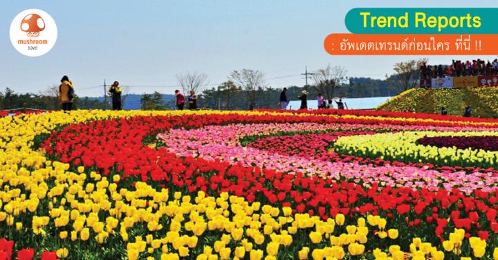 Taean Tulip Festival 2018 ชวนมาดูทิวลิปสีสันสดใส หัวใจเกาหลี