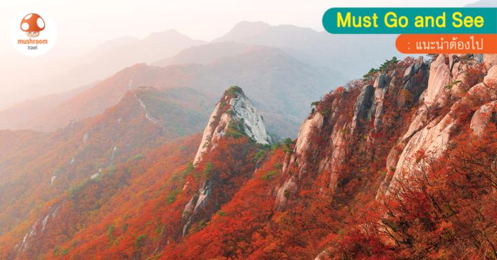 เที่ยว ซอรัคซาน ใบไม้เปลี่ยนสี ตามหาใบไม้แดงที่เกาหลี