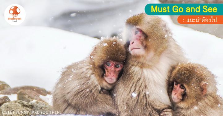 Winter in NAGANO : SNOW MONKEY – ดูลิงแช่ออนเซน