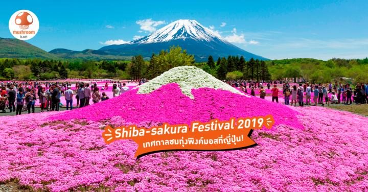 เทศกาล ชิบะซากุระ 2019 ทุ่งพิงค์มอสสุดอลัง ต้องไปดูสักครั้งที่ญี่ปุ่น!