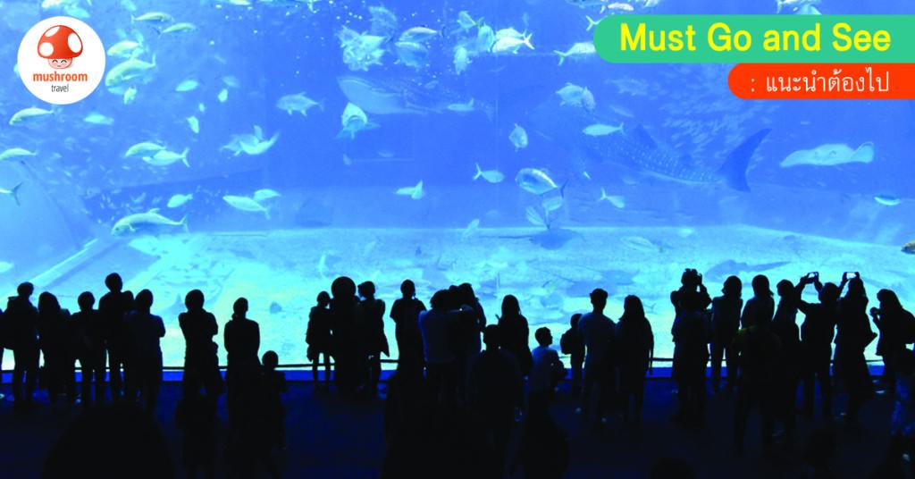 6 พิกัด โลกใต้น้ำ 2018 สุดยอดอควาเรียมน่าไปแห่งเอเชีย!