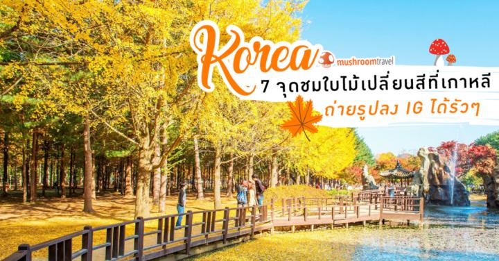 7 ที่เที่ยว ใบไม้เปลี่ยนสี เกาหลี 2019 ยอดฮิต ถ่ายรูปลง IG ได้รัวๆ