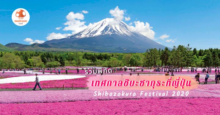 รวม 4 เทศกาล ชิบะซากุระ 2020 ทุ่งพิงค์มอสสุดอลัง ต้องไปดูสักครั้งที่ญี่ปุ่น!