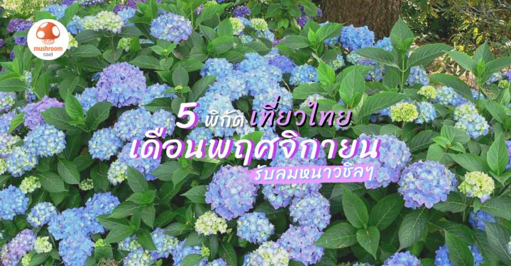 พฤศจิกายน เที่ยวไหนดี กับ 5 พิกัด เที่ยวไทย รับลมหนาว